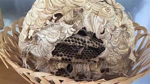 Wespen Unter Dachziegel : wespennest unter dem dach youtube ~ Articles-book.com Haus und Dekorationen