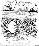 Beaver Dam Beavers Clipart Building Habitat Coloring Lodges Busy Illustration Clip Lodge Pages Cliparts Kindergarten Schoolhouse Rock Elephant Library Clipground sketch template