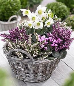 Winterharte Blumen Für Den Garten : sortiment winterzauber bei baldur garten ~ Whattoseeinmadrid.com Haus und Dekorationen
