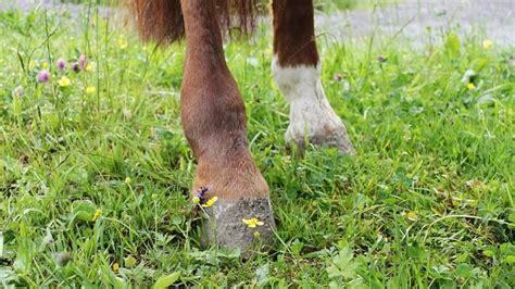 lahmheit beim pferd erkennen tiergesundde