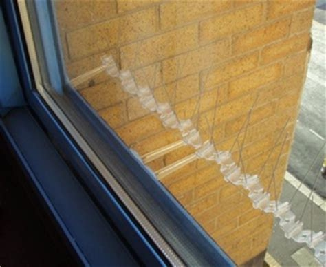 Window Sill Spikes by Bird Proofing Window Sills