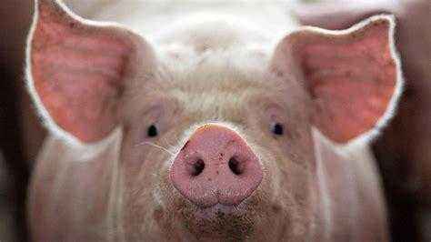 supreme   trolled  pork producer farmland foods