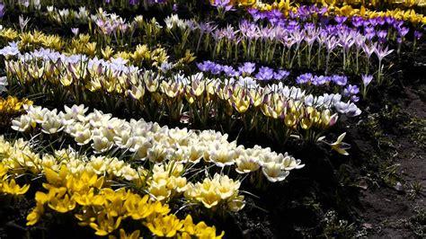 Pavasara puķes - YouTube