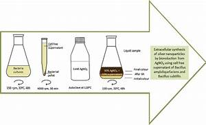 The Procedure Of Silver Nanoparticles Synthesis Using Cell