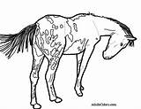 Horse Coloring Appaloosa Pages Pony Spotted Drawing Pinto Print Wagon Trail Gypsy Printable Real Train Getcolorings Vanner Colorings Getdrawings Ponies sketch template