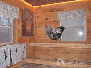 Chicken Coop Light Timer Supplemental Light In The Chicken Coop Why How The