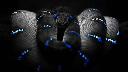 Snake Boa Constrictor Wallpapers Backgrounds Desktop Coloring