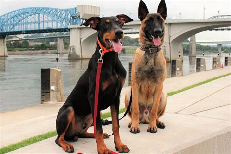 week dog training services  chattanooga tn good