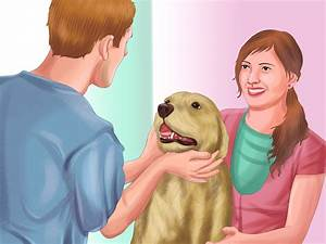 How To Recognize Signs Of Anxiety In Dogs  With Pictures