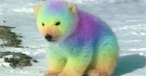 Rainbow Animal Wallpaper - real rainbow animals rainbow animals wallpapers