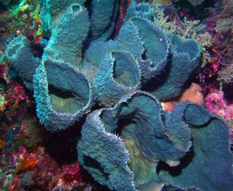 10 Facts You Didn't Know About Sea Sponges