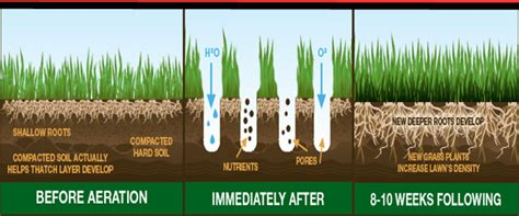 benefits of aerating lawn timeless environments in pursuit of the perfect lawn why i ve always hated lawns as a