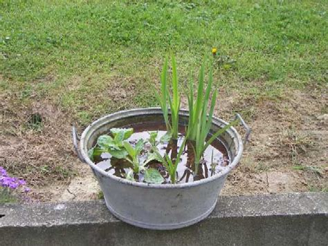 planter des glaieuls en pot news de jardinage page 4