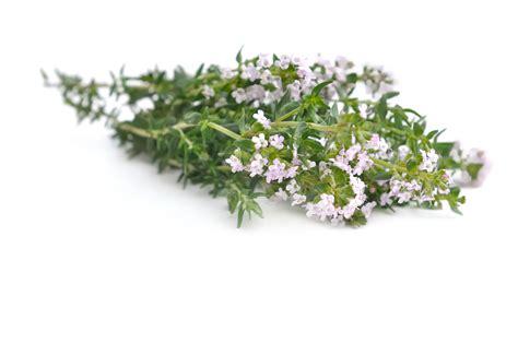 cuisine des fleurs les fleurs comestibles pour une cuisine colorée et pleine
