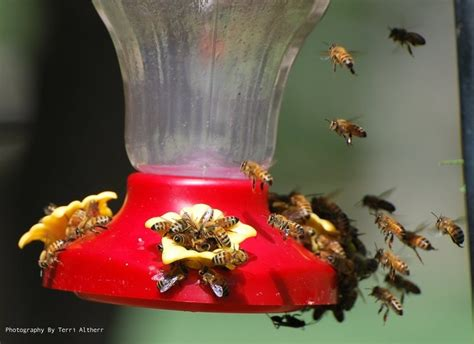 best 25 humming bird feeders ideas on pinterest