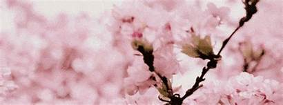Flower Flowers Gifs Pretty Nature Gorgeous Animated