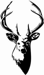 Whitetail Deer Skull Drawings - ClipArt Best