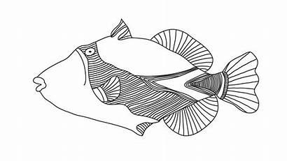 Everything Yoon Fish Coloring David Hawaiian Drawings