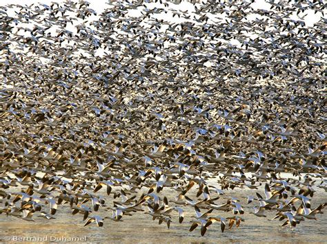 Birds... Lots of birds !!!! - Animal & Insect Photos ...