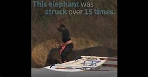 VIDEO: Elephants brutally beaten at prestigious polo event ...