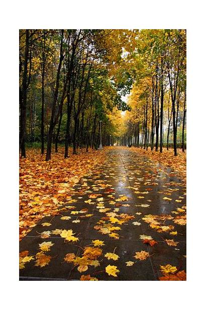 Autumn Happy Leaves Fall Wind Blowing Animated