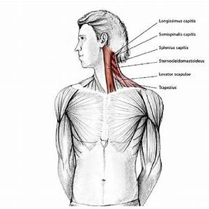 Easy Stretches To Release Tension In The Neck  U0026 Shoulders
