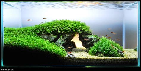 Japanese Aquascape by Zen And The Of Fish Tank Maintenance Aquascapers