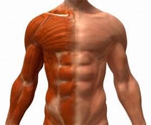 Lean Body Mass: Why Muscle Is A Good Thing