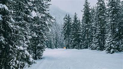 Forest Winter Snow Trees Road Wallpapers Background