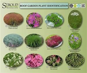Green, Roof, Plants