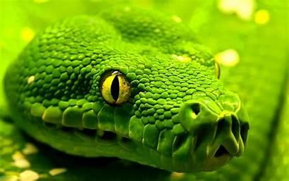 Snake Anaconda