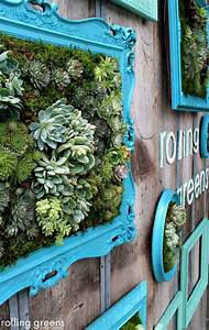 Framed succulents for wall decor home decorating trends