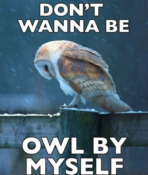 Sad No Meme - hilariously adorable owl memes 14