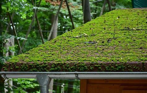 telhado verde sobre telha metalica decorando casas