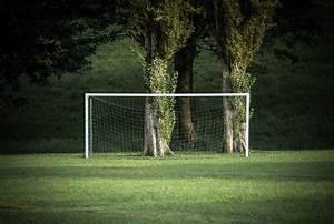 grass green trees sport soccer field wallpapers hd
