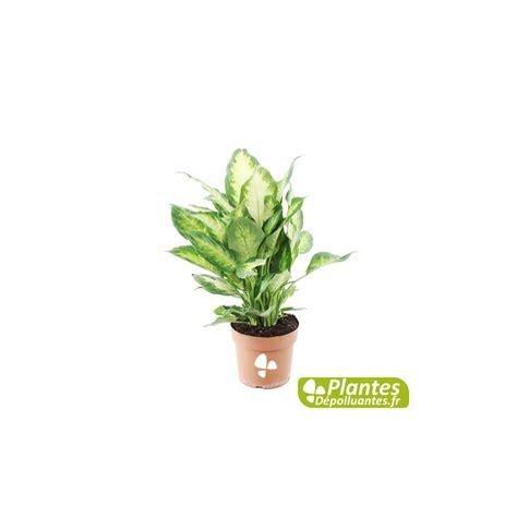 plante depolluante d interieur maison design bahbe