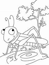 Grasshopper Coloring Pages Preschool Printable Insect Kindergarten Stopper Sheets Crafts Colouring Grasshoppers Fun Painting Insects Drawing Activity Bugs Preschoolcrafts Bestcoloringpages sketch template