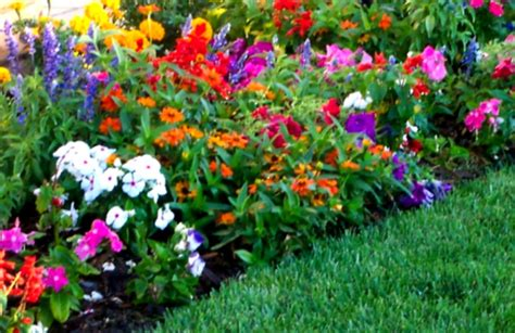 flower garden landscaping with green grass and colourful