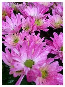Planter Des Choux Fleurs : vase medicise composition lierre choux un amour du temps ~ Melissatoandfro.com Idées de Décoration