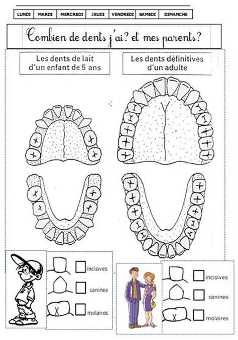 formation en cuisine pour adulte dossier sur les dents cycle 2 de monsieur mathieu