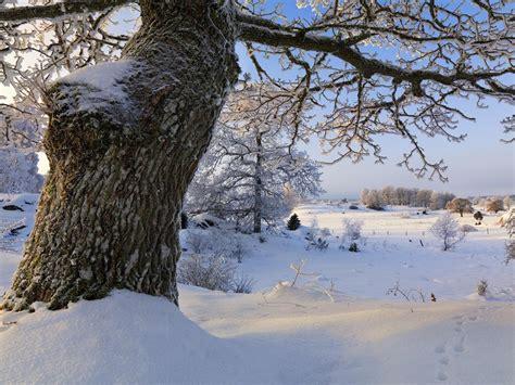 sweden seasons natural beauty hd wallpaper  preview
