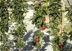 Apfelbaum Für Balkon : s ulen pfel schnitt pflege sorten red river ~ Michelbontemps.com Haus und Dekorationen