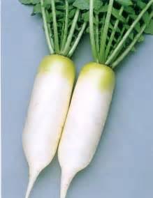 Long White Turnip Roots