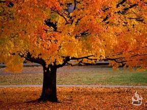 beautiful autumn season wallpapers hd wallpapers