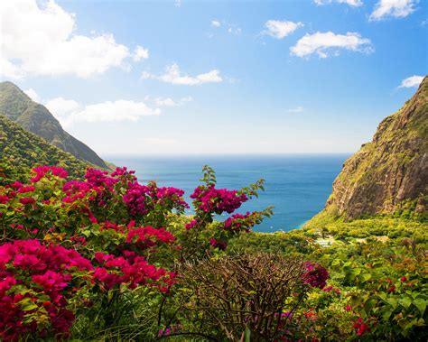 caribbean islands saint lucia beach sea red flowers green