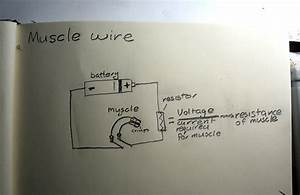 Muscle Wire