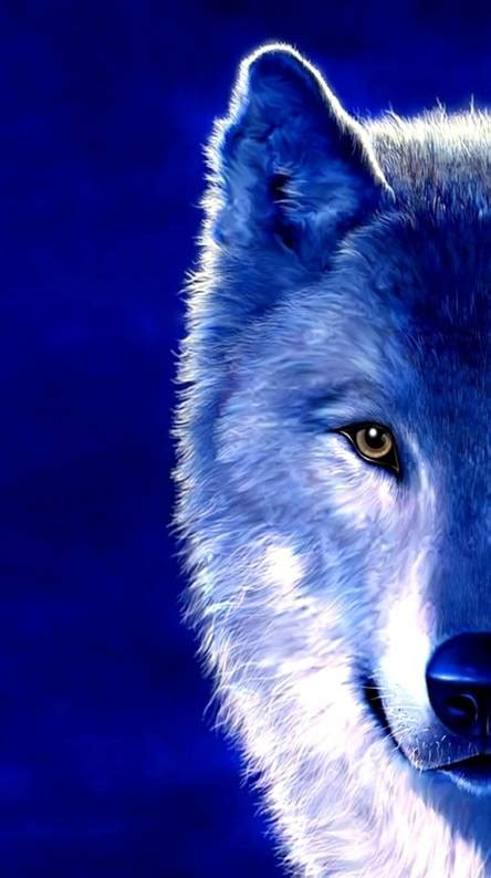 blue wolf wallpapers   zedge