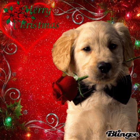 merry christmas dog picture 131217129 blingee com