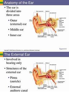 Ear Diagram Pearson