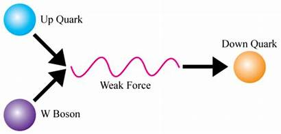 Forces Atomic Weak Force Nuclear Science Proton